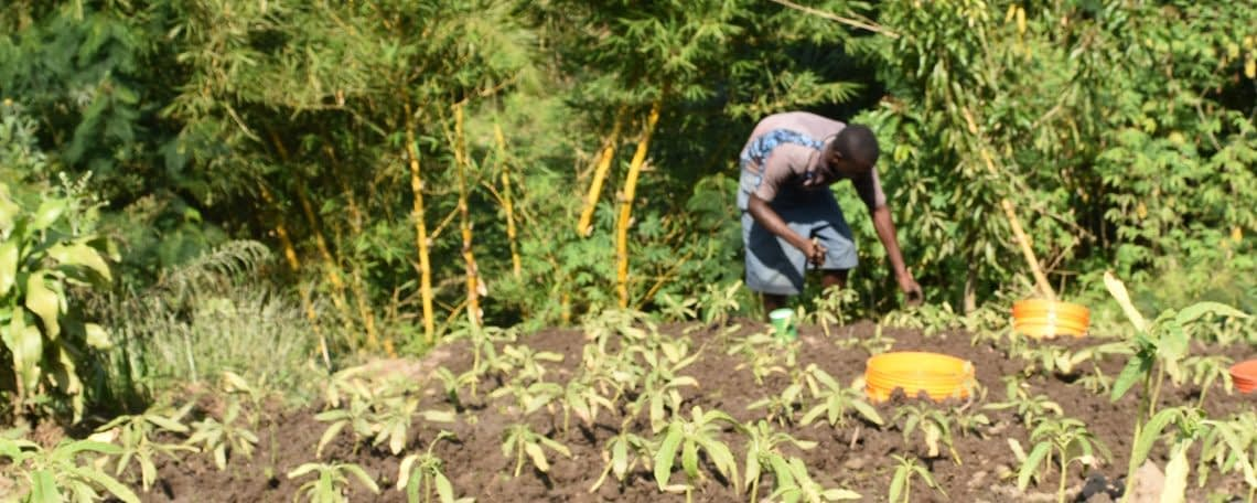 tending to crops - United Citizens for Change and Development